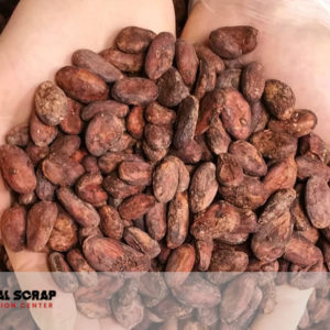 The cocoa bean or simply cocoa,